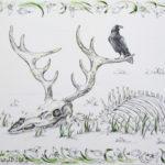 скелет череп животное олень